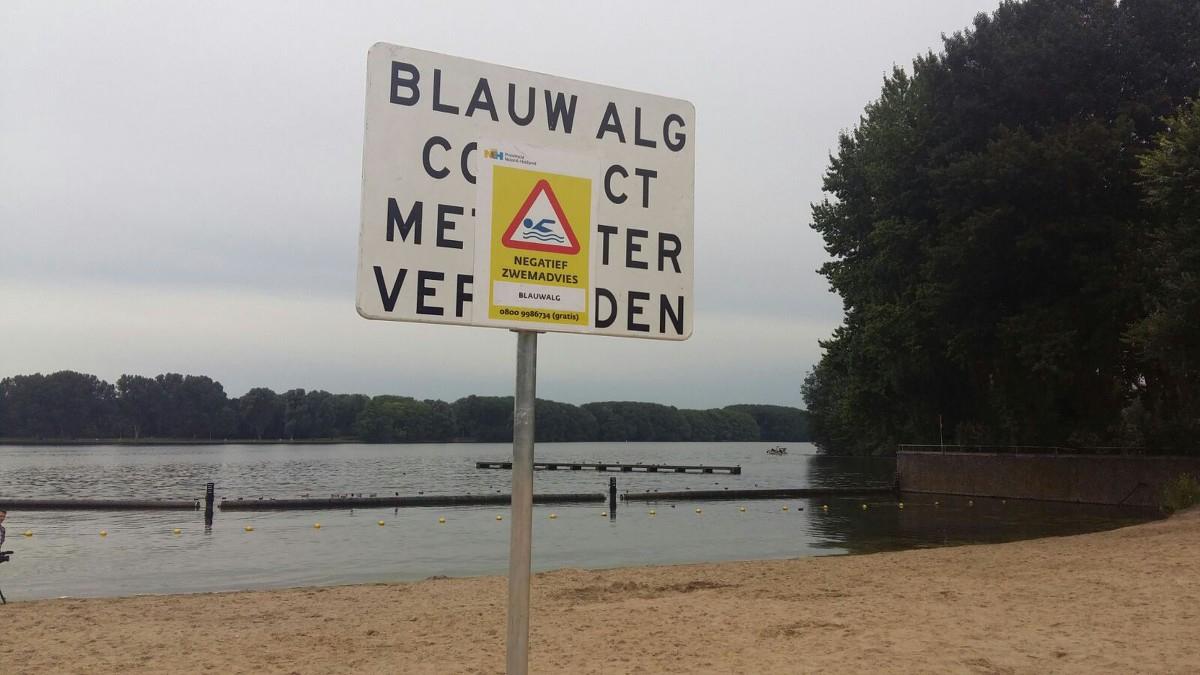 Blauwalg in Sloterplas en Nieuwe Meer